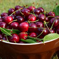 A Bowl Of Tart Cherries