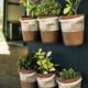 Six Potted Plants Close Up Photo